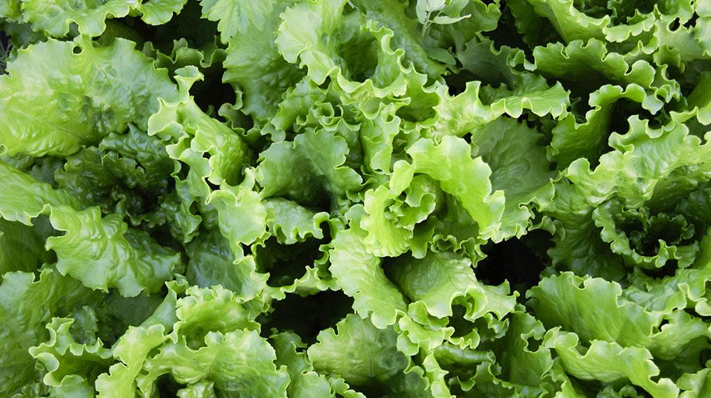 Овощи и фрукты: вырастить или купить?