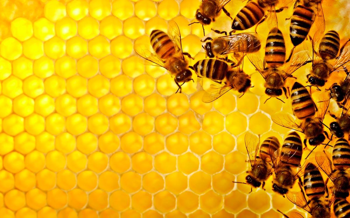 Почему веганы не едят мед: несколько причин отказа от сладкого лакомства